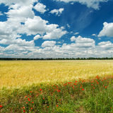 Field with flowers and cloudy sky Royalty Free Stock Photos