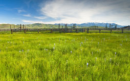 Field of flowers and Corral with mountains Stock Photo
