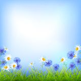Field flowers daisy cornflower grass background. Vector field flowers (daisy, cornflower), blue sky, green grass summer day natural  background Royalty Free Stock Photography