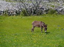 Field flowers and a donkey Stock Photo