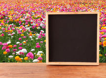 Field of flowers and empty chalkboard Royalty Free Stock Photography