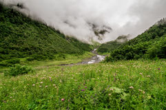 A field with flowers. High in the mountains with fogs Stock Photos