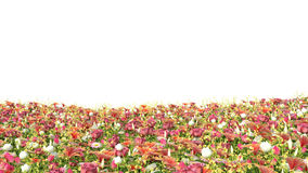 Field of flowers, isolated on white background Royalty Free Stock Photos