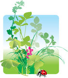 Field flowers and ladybird, spring. Variety of field herbs, plants, grass and ladybird. Vector illustration Stock Images
