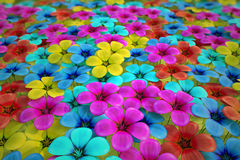 Field of flowers. Royalty Free Stock Photography