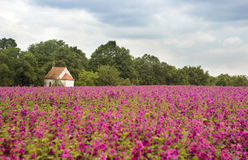 Field of flowers with little chapel in the background Stock Photo