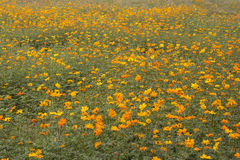 Field of flowers 4 Stock Images