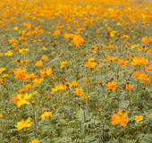 Field of flowers 5 Stock Images