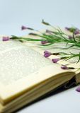 A field flowers on an open book. Still life with an open book of Honore de Balzac. Stock Image