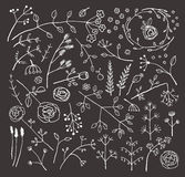 Field Flowers and Plants Decoration Collection on. Flowers leaves and grass set for design illustration. Vector EPS10 Royalty Free Stock Photography