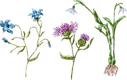 Field flowers set. Vector image of the hand drawn wild flowers Royalty Free Stock Photo