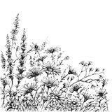 Field flowers sketch. Black and white page decoration vector illustration
