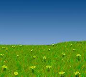 Field Flowers and Sky. A field with spring flowers and perfect blue sky Royalty Free Stock Images