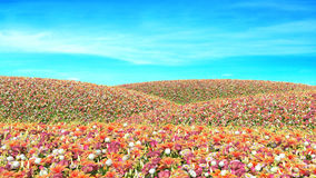 Field of flowers on sky background.  Stock Photography