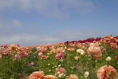 Field of Flowers. Springs flower in bloom in field Stock Images