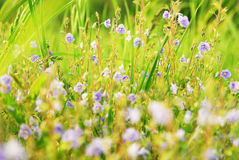 Field of flowers, summer background Stock Image