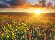 Agricultural landscape as a background Stock Photos