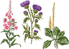 Field flowers. Vector image of the hand drawn wild flowers Stock Images