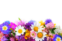 Field flowers on whi Stock Image