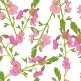 Field flowers Stock Photos
