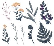 Field flowers, wild plants. And herbs. Fern, blueberry, tree branches and foliage. Night and dark greenery art. Natural leaves. Decorative beauty illustration Stock Photo