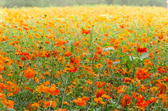 A field of flowers. A field of wildflowers on the sun light Stock Images