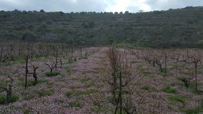 Field of flowers. A field of flowers in between a winery Royalty Free Stock Image