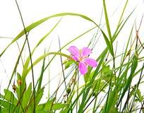 Field flowerses Stock Image