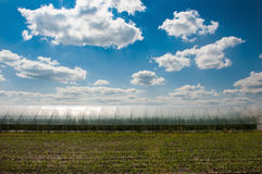 Field with fluffy white clouds in the blue sky. Green field under beautiful dark blue sky. Field of grass and perfect blue sky. Field with fluffy white clouds in Stock Photo