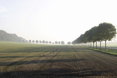 Field in fog. Stock Image