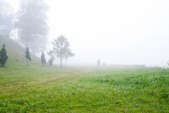Field and fog Royalty Free Stock Photos