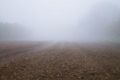 Field in fog Stock Photography