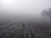 Field in the fog. Hoarfrosted farmland field with tree on a foggy winter day stock images