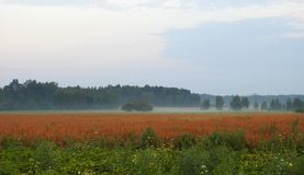 Field in fog early morning, Lithuania Royalty Free Stock Photography