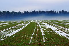 Field with fog at forest in winter. A field with some snow remaining and fog ascending at the forest edge in the background. German countryside in winter Stock Photo