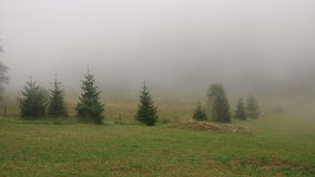 Field in the fog stock video footage