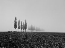 Field with foggy poplars. Foggy field with poplars fading in the horizon Royalty Free Stock Photos