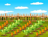 Field of food crops. Illustration stock illustration