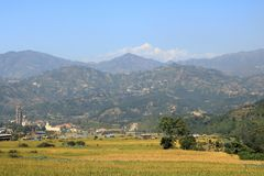 Field in the foothills of Himalayas stock photography