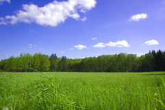 Field and forest conceptual image. Picture of green field and forest with blue sky in summer Royalty Free Stock Photography