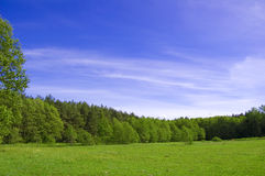 Field and forest conceptual image. Picture of green field and forest with blue sky in summer Royalty Free Stock Photo