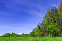 Field and forest conceptual image. Picture of green field and forest with blue sky in summer Royalty Free Stock Image
