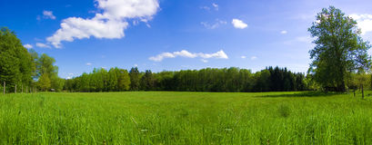 Field and forest conceptual image. Panorama of green field and forest with blue sky in summer Stock Images