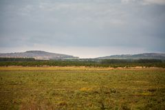 A field of forest in the distance with hills and a cloudy sky in the autumn. royalty free stock photos