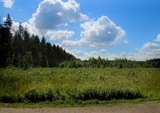 Field and forest on the edge of the road. Royalty Free Stock Photo