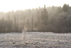Field and forest frost in the morning mist. Field and forest in frost in the morning mist illuminated by the sun Stock Photography
