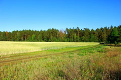 Field and forest landscape stock image