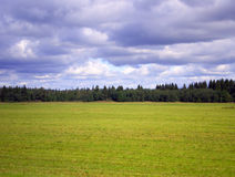 Field, forest and sky. Green field with forest on horizon and rainy clouds on the sky Royalty Free Stock Photos