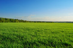 Field and forest under clear sky Stock Photography