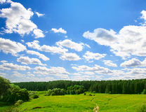 Field and forest Royalty Free Stock Image